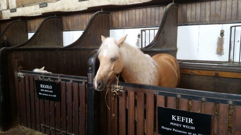 生きた馬の博物館 Musée Vivant du Cheval